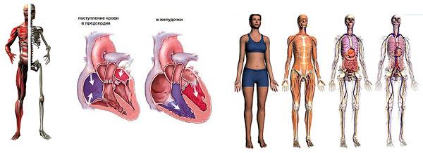 «Основы функциональной анатомии» - семинар компании Wellcom