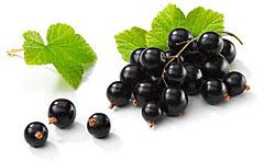 Смородина — одна из самых полезных ягод на свете