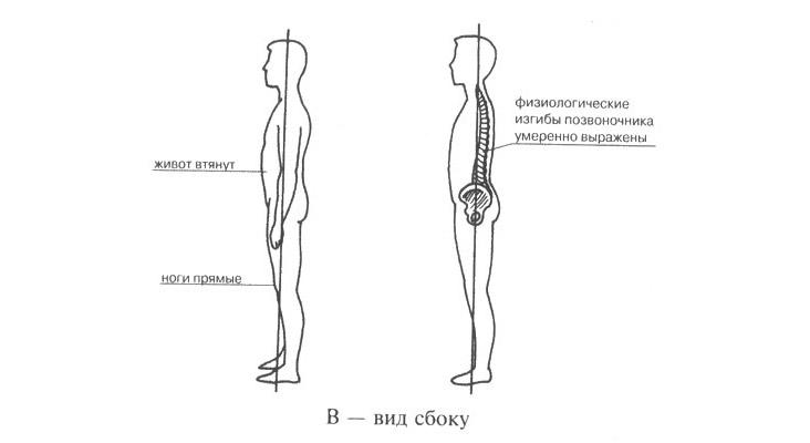 Осанка в норме в сагиттальной и фронтальной плоскостях