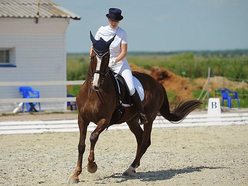 Установлено, что при спокойной езде на лошади шагом человек тратит столько же энергии, сколько при быстрой спортивной ходьбе, а в режиме галопа — как при беге.
