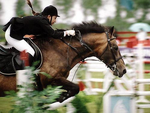 Общение с лошадью.