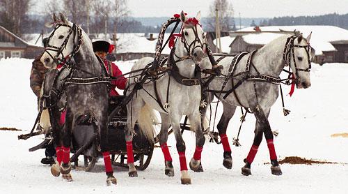 В праздники в Москве можно будет прокатиться на лошадях и собачьих упряжках