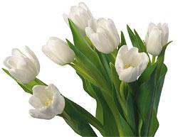 С 1 по 8 марта всем  женщинам праздничные суперскидки и подарки от клуба «АВ-Флекс»!