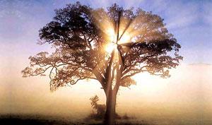 Люди дерева