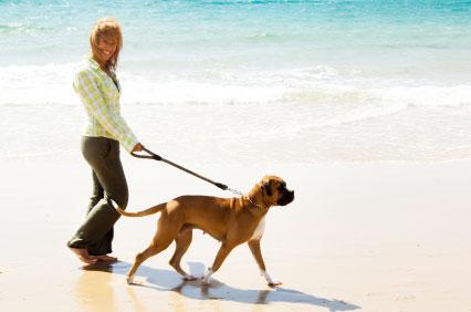 Ходить с собакой полезнее, чем с приятелем