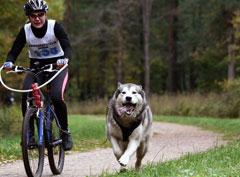 Дог-фитнес или как разнообразить прогулки с собакой
